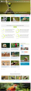 IT PlanetEarth Joomla Template for Non-profit, Nature or Wildlife Sites
